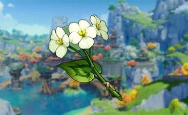 Conseguir Flor Chingxin | Genshin Impact.